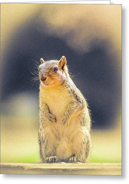 American Red Squirrel Greeting Card