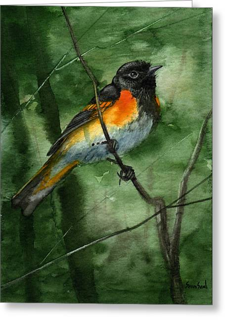 American Redstart Greeting Card by Sean Seal