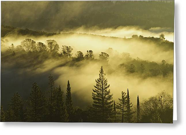 Greeting Card featuring the photograph American River Canyon In The Fog by Sherri Meyer