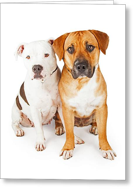 American Staffordshire And Large Mixed Breed Dogs Sitting Togeth Greeting Card
