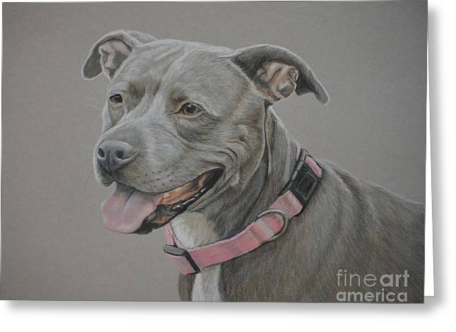 American Staffordshire Terrier Greeting Card by Charlotte Yealey