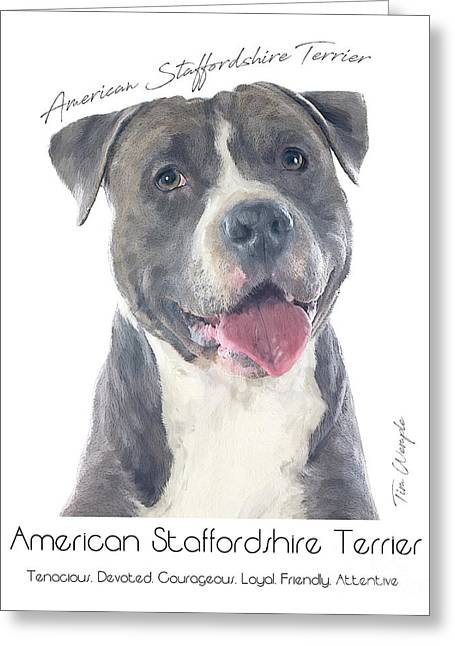 American Staffordshire Terrier Poster 2 Greeting Card by Tim Wemple