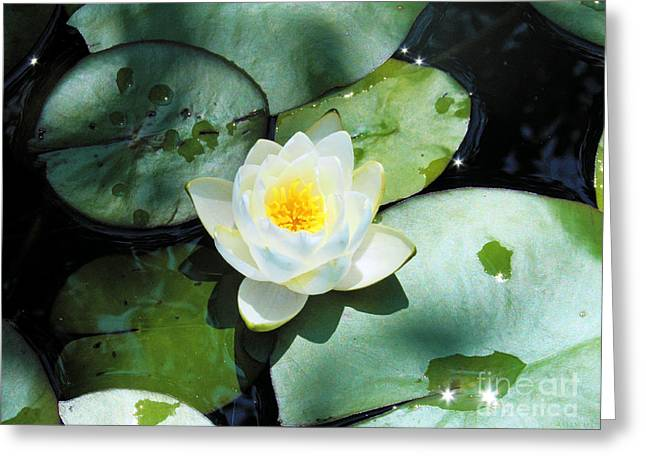 American Water Lilies Greeting Card