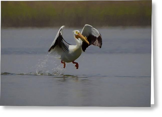 American White Pelican Da 2 Greeting Card by Ernie Echols