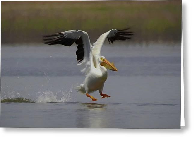 American White Pelican Da 3 Greeting Card by Ernie Echols