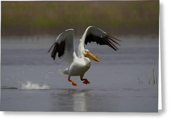 American White Pelican Da 4 Greeting Card by Ernie Echols
