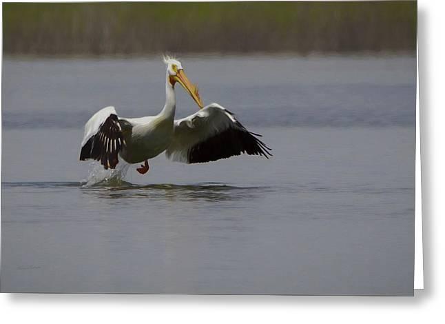 American White Pelican Da Greeting Card by Ernie Echols