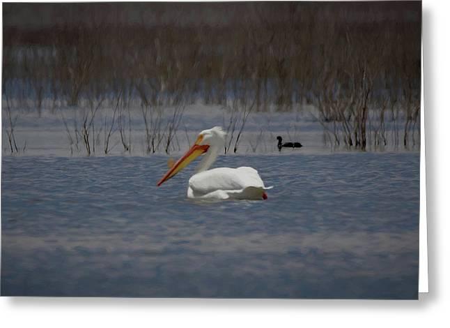 American White Pelican Searching Da Greeting Card by Ernie Echols