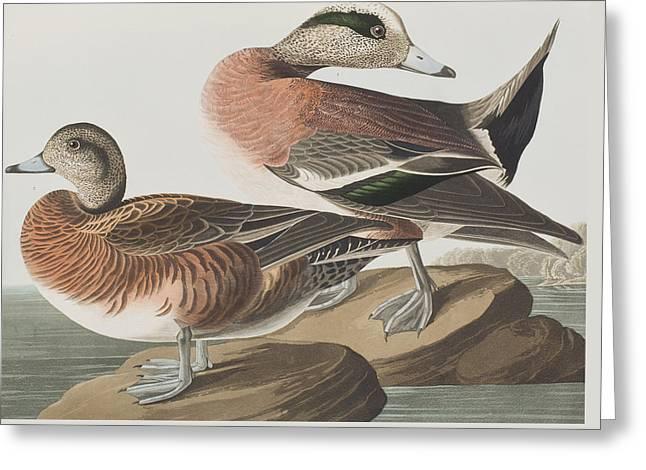 American Widgeon Greeting Card by John James Audubon