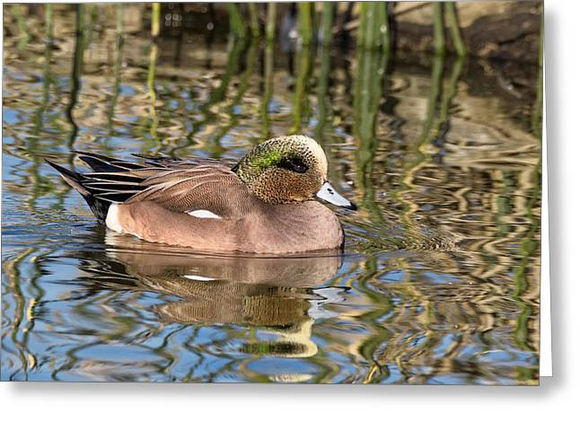 American Wigeon In Winter Greeting Card