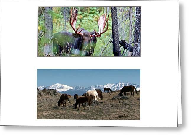 American Wild Animals Horses Mustangs Moose Deer Greeting Card by Navin Joshi