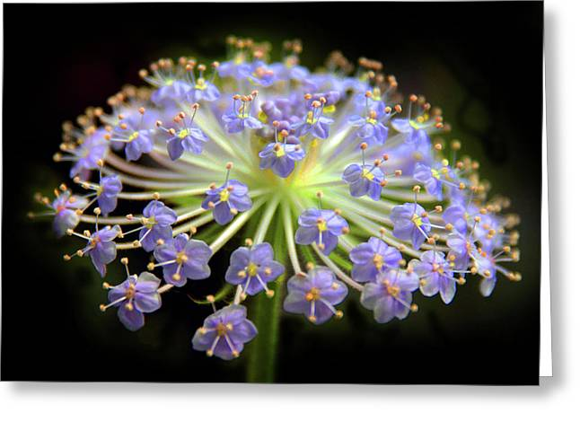 Amethyst Allium Greeting Card by Jessica Jenney
