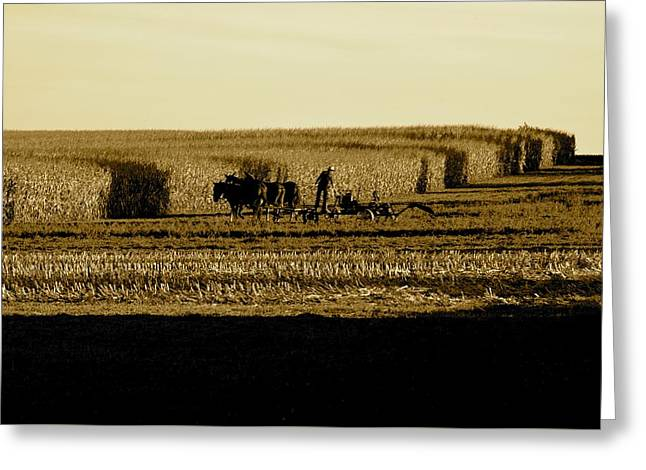 Amish Cornfield In Shadows Greeting Card