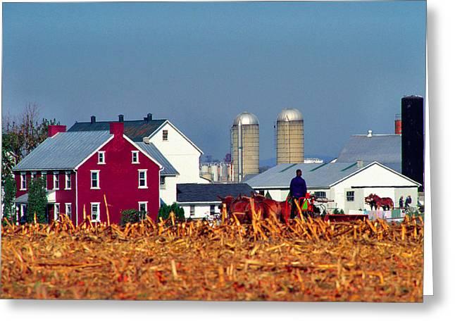 Cornfield Greeting Cards - Amish Farm Greeting Card by Thomas R Fletcher