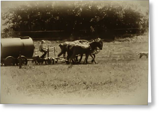 Amish Digital Art Greeting Cards - Amish Farmer - Lancaster County Pa. Greeting Card by Bill Cannon