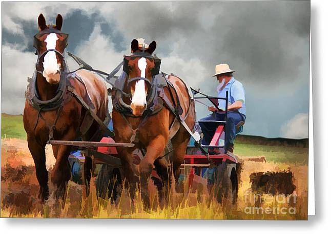 Amish Farmer Greeting Card by Tom Griffithe