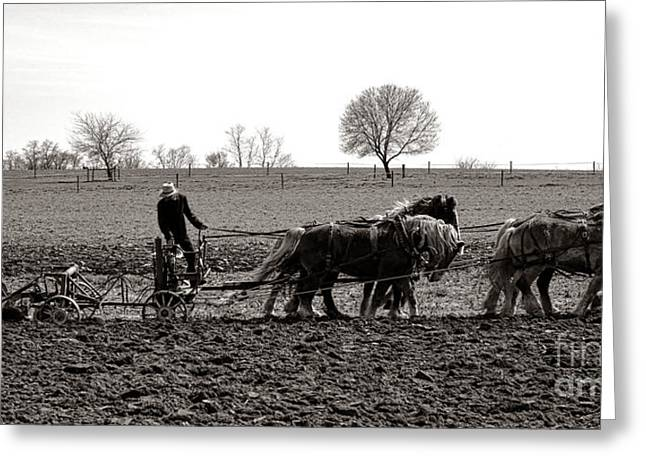 Amish Farming Greeting Card