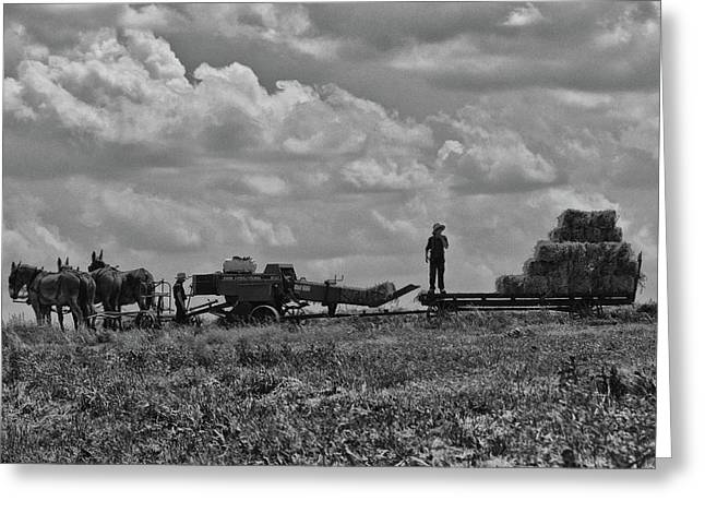 Amish Farming Greeting Card by Tricia Marchlik
