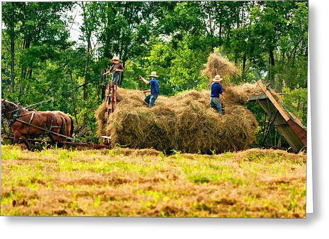 Amish Harvest 2 - Paint Greeting Card by Steve Harrington