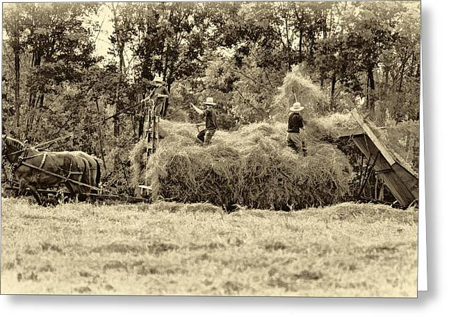 Amish Harvest 2 - Sepia Greeting Card by Steve Harrington