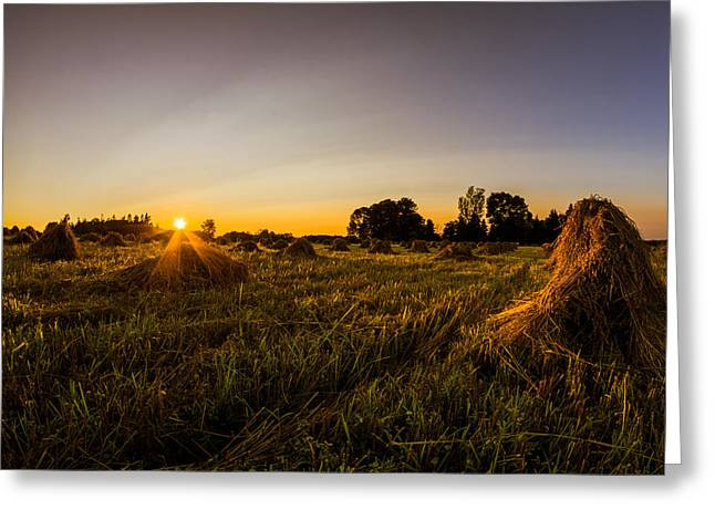 Amish Harvest Greeting Card by Chris Bordeleau