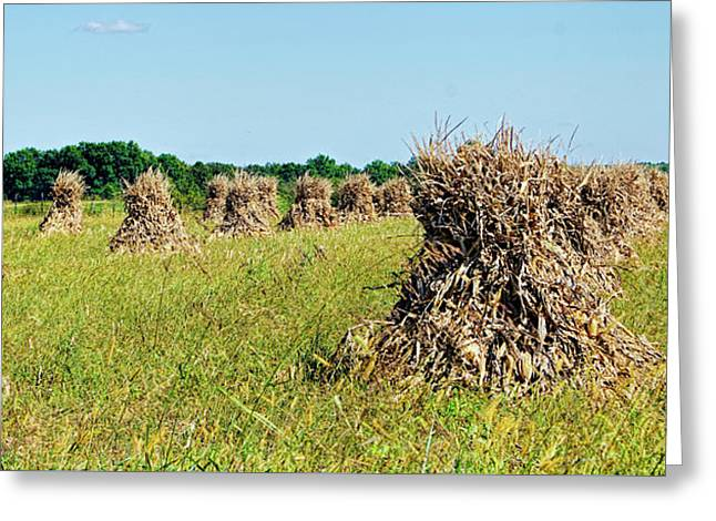 Greeting Card featuring the photograph Amish Harvest by Cricket Hackmann