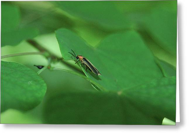 Among Green Leaves Greeting Card