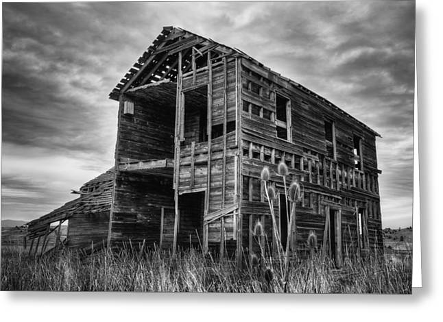 Among The Weeds - Monochrome Greeting Card by Loree Johnson