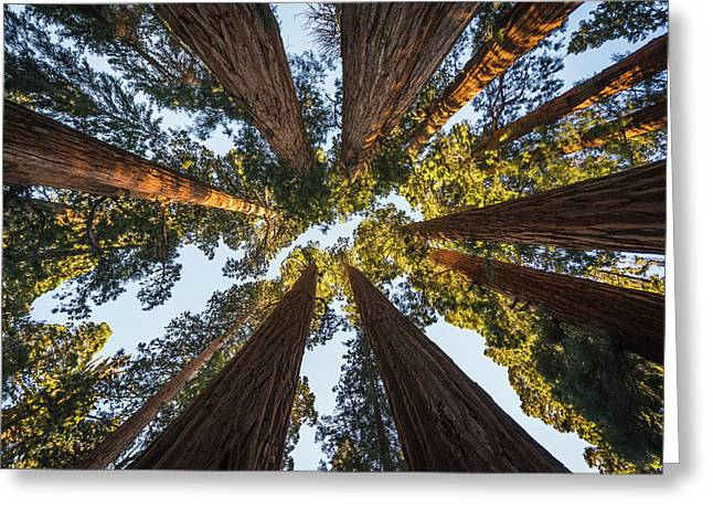 Amongst The Giant Sequoias Greeting Card by Alpha Wanderlust
