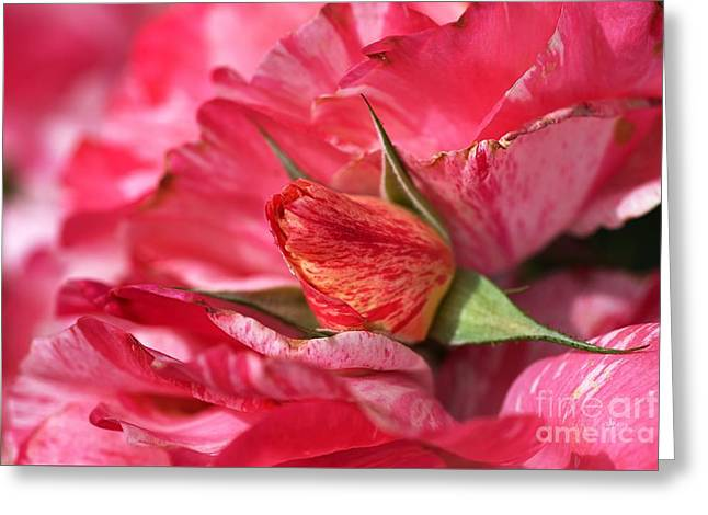 Amongst The Rose Petals Greeting Card