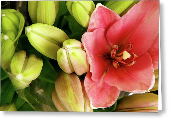 Greeting Card featuring the photograph Amsterdam Buds by KG Thienemann