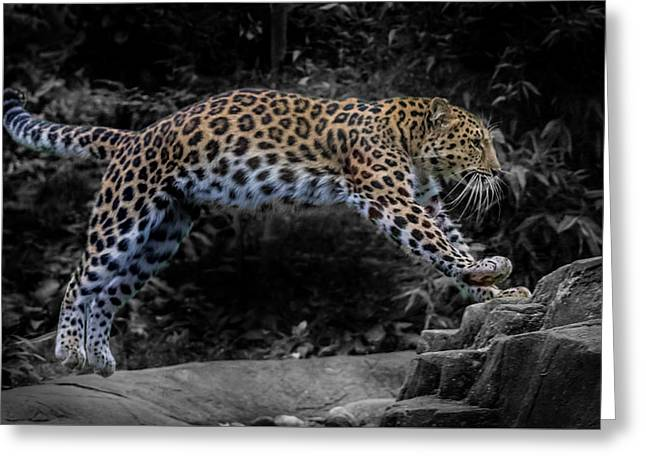 Amur Leopard On The Hunt Greeting Card by Martin Newman