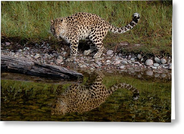 Amur Leopard Reflection Greeting Card