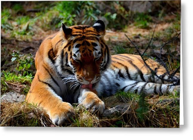 Amur Tiger 2 Greeting Card