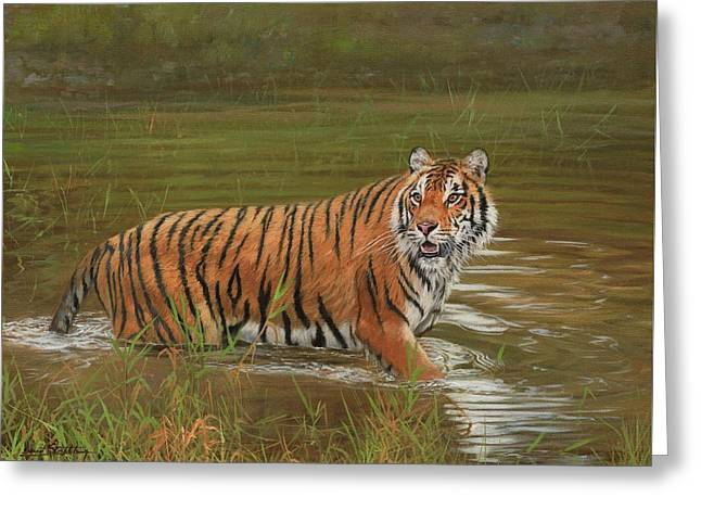 Amur Tiger Cooling Off Greeting Card
