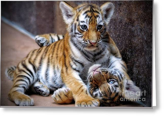 Amur Tiger Cubs Greeting Card