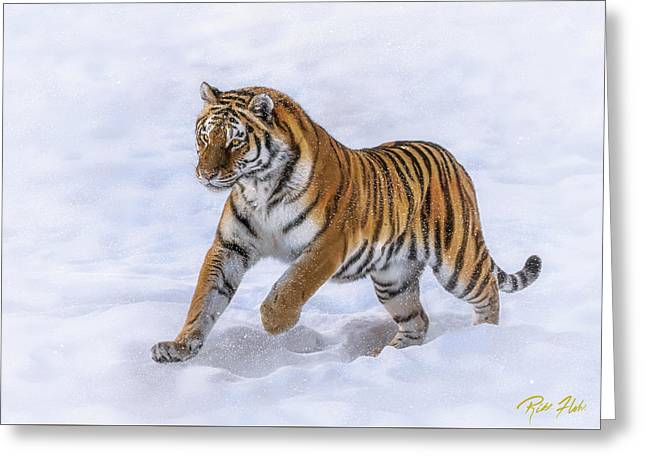 Greeting Card featuring the photograph Amur Tiger Running In Snow by Rikk Flohr