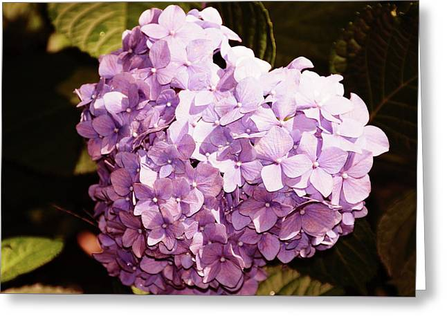 Amethyst Greeting Card by JAMART Photography