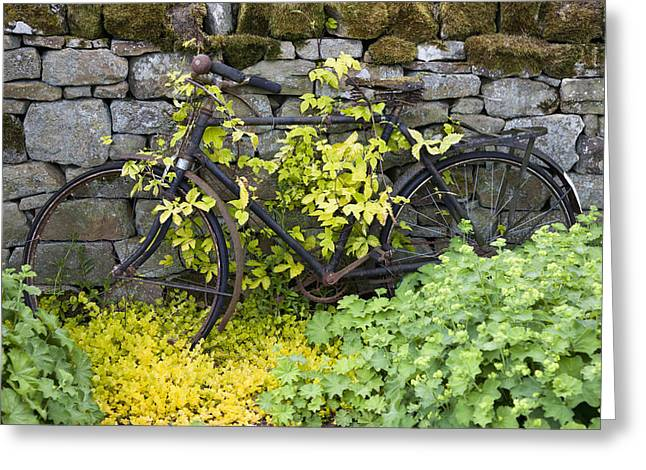 An Abandoned Bicycle Surrounded And Greeting Card by John Short