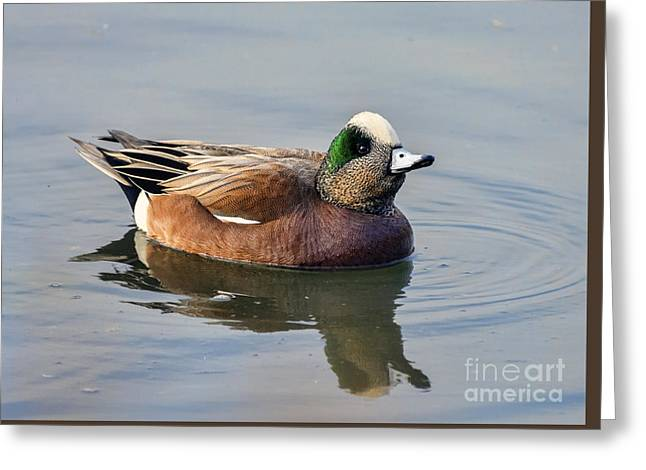 An American Wigeon Out For A Stroll Greeting Card