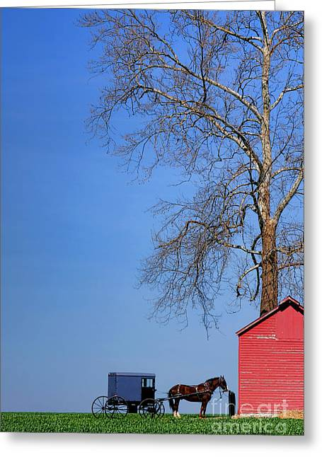 An Amish Scene Greeting Card by Olivier Le Queinec