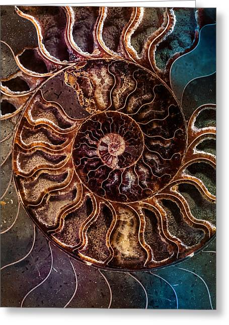 An Ancient Shell Greeting Card by Jaroslaw Blaminsky