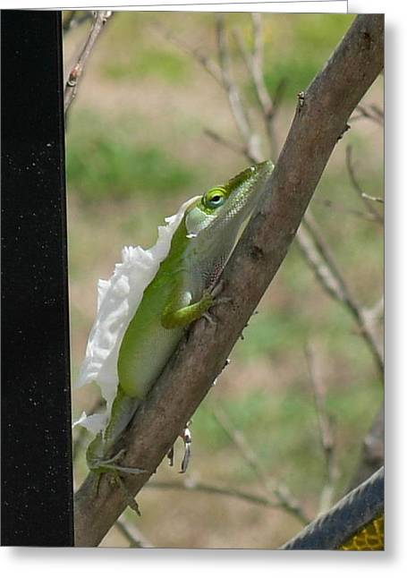 Greeting Card featuring the photograph An Anole Shedding Its Skin by Jeanne Kay Juhos