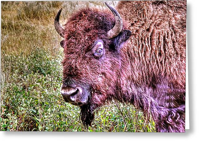 An Astonished Bison Greeting Card