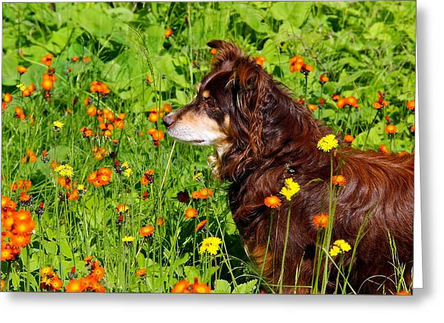 An Aussie's Thoughtful Moment Greeting Card by Debbie Oppermann