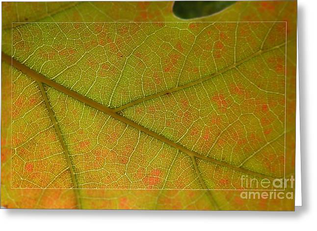 Greeting Card featuring the photograph An Autumn Leaf by Jean Bernard Roussilhe