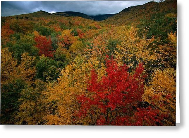 Autumn Views Greeting Cards - An Autumn View Greeting Card by Tim Laman