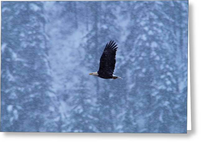 An Eagl Flying In Snowfall Greeting Card