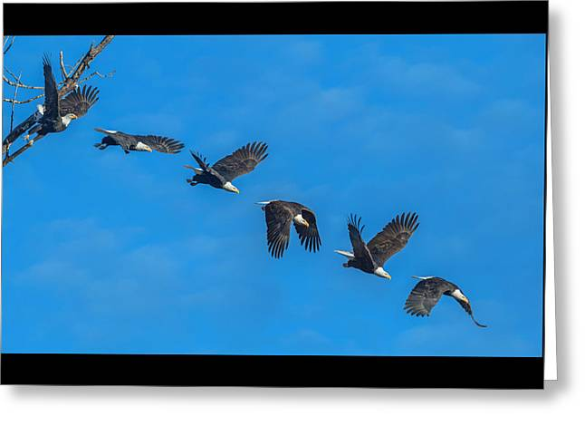 An Eagle Flight Path Greeting Card by Angie Vogel