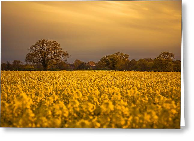 An Evening In The Rapeseed Field Greeting Card by Chris Fletcher